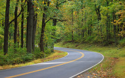 Road through forest. Road through the trees bending left royalty free stock photo