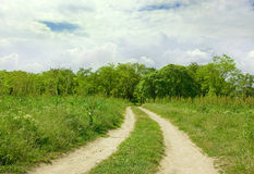 Road in forest. Photography of road in forest. white sky. the day Royalty Free Stock Photos