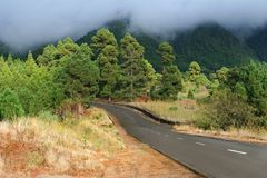 Road through forest. Scenic view of road receding into forest with rain clouds and mountains in background Stock Image