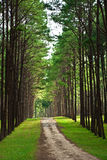 Road through the forest. Stock Photography