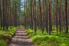 Road in the forest. Stock Photos
