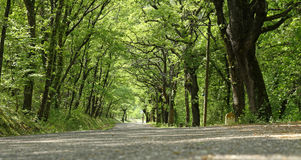 Road forest Stock Photos