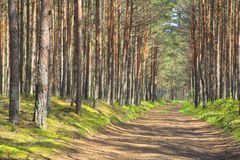 Road through the forest. Royalty Free Stock Image
