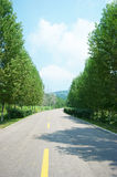 Road in forest Royalty Free Stock Photos