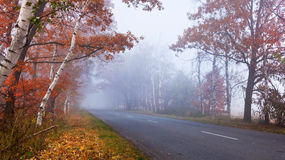 Road  in the forest. Royalty Free Stock Images