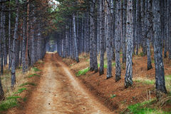 The road  in the forest Royalty Free Stock Photo