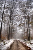 Road in the forest. In late autumn, foggy morning Royalty Free Stock Image