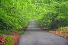 Road through the forest. One foggy morning Royalty Free Stock Photo