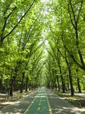 Road in forest. Biking road in green forest of a city park, Bucharest Stock Photo