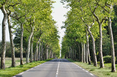 Road in forest. Road with fresh green trees on side Stock Images