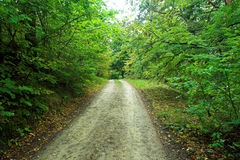 Road in forest. Far view Royalty Free Stock Photography
