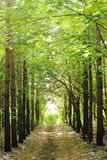 Road in the forest. Direct road in the forest Stock Photos
