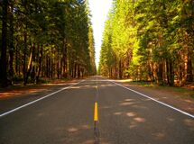 Road through forest Royalty Free Stock Photo