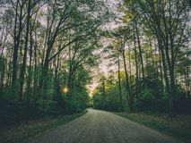 Road through forest Stock Photography