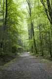 Road through forest Royalty Free Stock Image