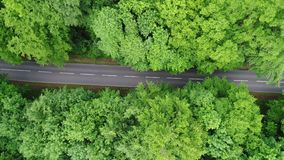 Road through a forest - aerial view stock video footage