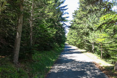 Road of Forest in Aran valley, Spain Royalty Free Stock Photo