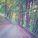 Road in Forest Stock Photography