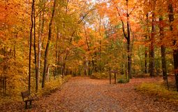 Road in the forest in autumn Royalty Free Stock Photography