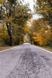 Road in the forest Royalty Free Stock Photo
