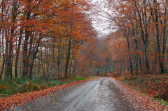 Road in the forest in autumn Royalty Free Stock Images