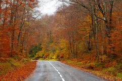 Road in the forest in autumn, fall colors Stock Photos