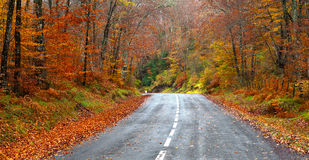 Road in the forest in autumn, fall colors Royalty Free Stock Image