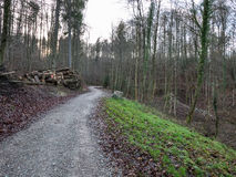 Road through a forest in autumn. A road going through a forest in Switzerland Royalty Free Stock Photography