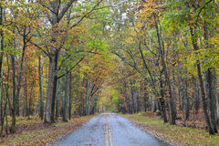 Road in a Forest in Autumn. Road in Kings Mountain State Park in the fall, Blacksburg, South Carolina royalty free stock images