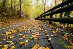 Road in the forest in autumn with orange leaves Royalty Free Stock Photos