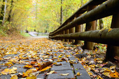 Road in the forest in autumn with orange leaves Royalty Free Stock Images