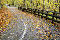 Road in the forest in autumn with orange leaves Stock Image