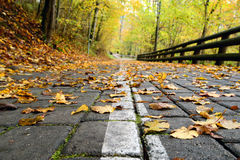 Road in the forest in autumn with orange leaves Royalty Free Stock Photo