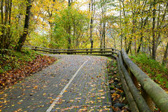 Road in the forest in autumn with orange leaves Stock Images