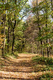 Road through the forest Royalty Free Stock Photo