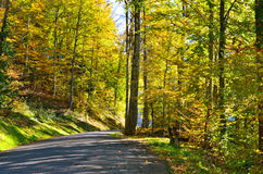 Road in the forest in autumn royalty free stock photo