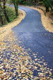 Road in the forest autumn time yellow leaves Stock Photos