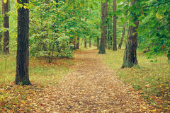 Road through forest in autumn Stock Photos