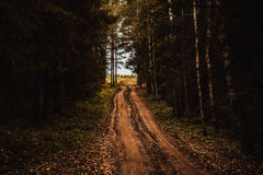Road in the dark forest. Autumn road in the woods Stock Photography