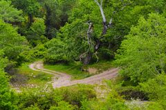 Road in forest, Azerbaijan Stock Image