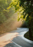 Road through the forest with beams of light Royalty Free Stock Photo