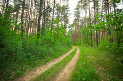 The road in the forest. Royalty Free Stock Photos
