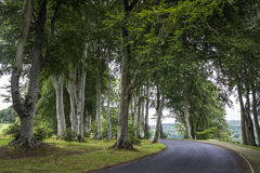 Road in forest with beautiful tall trees in Ireland, Wicklow Royalty Free Stock Images