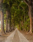 Road in the forest royalty free stock image