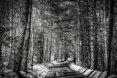 Road in the forest. Black and white road in the forest Royalty Free Stock Photos