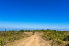Road in forest and blue sky atmosphere Stock Image