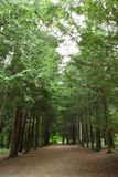 A road in a forest royalty free stock photography