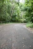 Road in forest at Chonburi Stock Image