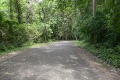 Road in forest at Chonburi Royalty Free Stock Photos