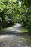 Road in forest at Chonburi Stock Photos